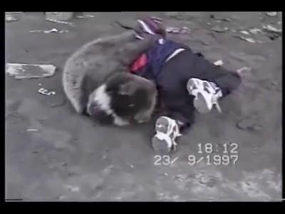малыши борется с медвежонком