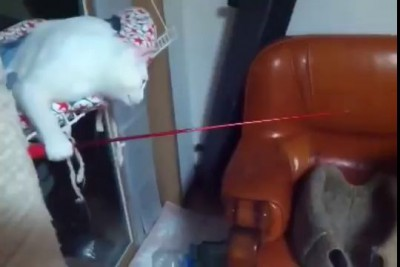 When a cat learns from the humans