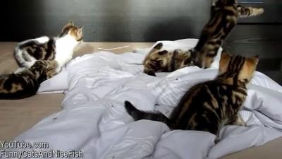 Веселый подарок от котят и кошек