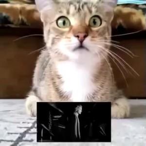 """Кот смотрит """"Психо"""""""