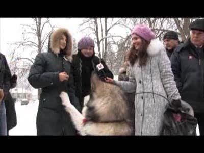 Ездовая белорусская