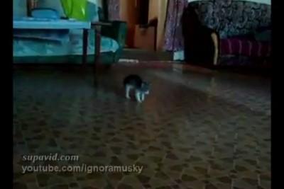 Котенок против страшной неведомой хрени
