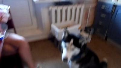 Собака-подпевака