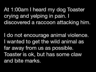 На мою собаку напал енот