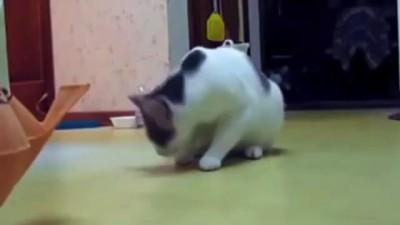 Коты боягузы