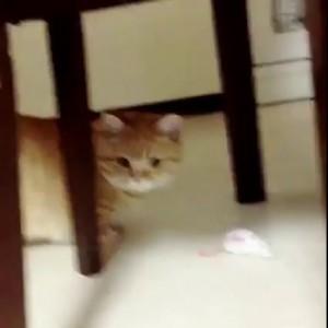 Заниженный кот