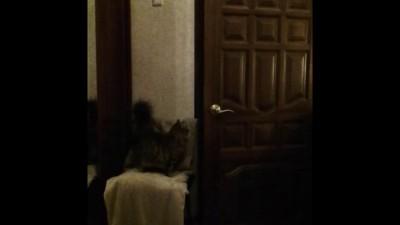 Кошка открывает замок.