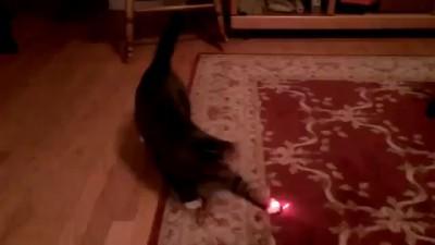 Кот с лазерной указкой на голове