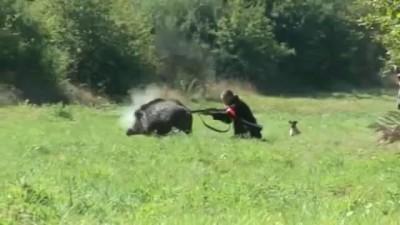 Стрельба в упор по кабану на охоте