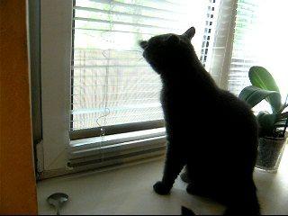 Кот и жалюзи