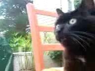 Неуравновешенный кот