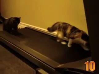 Топ 10 милых котов