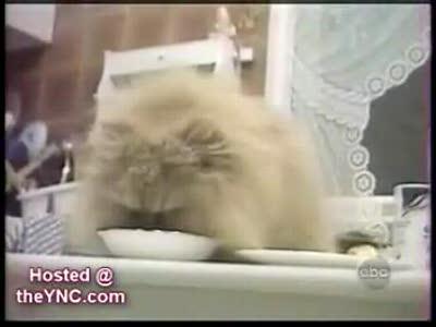 YAY! Funny Animal Videos!