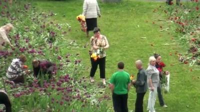 Воровство тюльпанов. Боровское шоссе 36