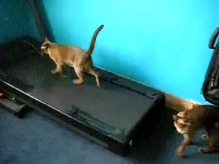 Fitness Kittens ~ Funny Video