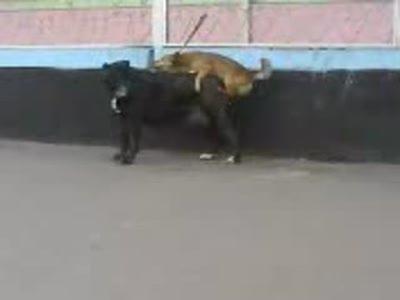 Пес-наездник