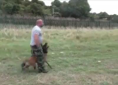 Тренировка кинолога с собакой