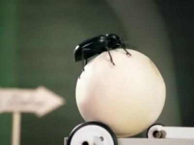 Цирк насекомых (The Bug Circus Generator)