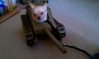 Tank Dog Weapons Test