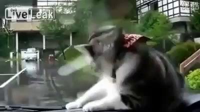 Кот и дворники