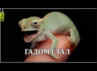 Гангнам стайл Перевод на Русский