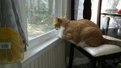 Максик охотится через окно