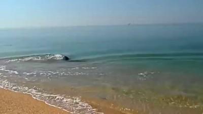 Дельфинчик ловит рыбку Крым Керчь
