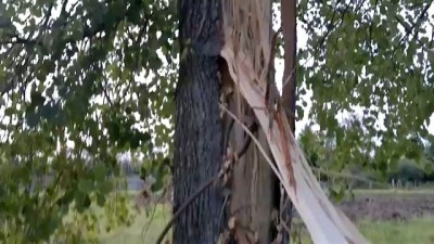 Молния в дерево,в щепки.