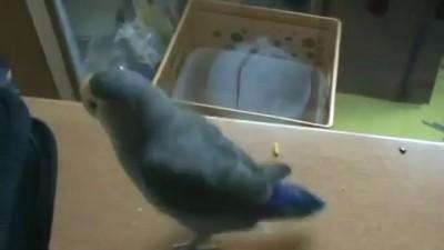 Подлый попугай и черепаха