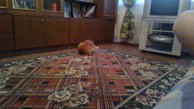 котенька кувыркается