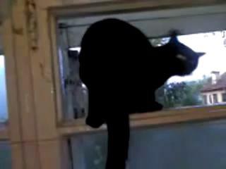Кот лает на соседей