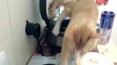 Кот нассал в мультиварку / Cat pee in a Multicooker