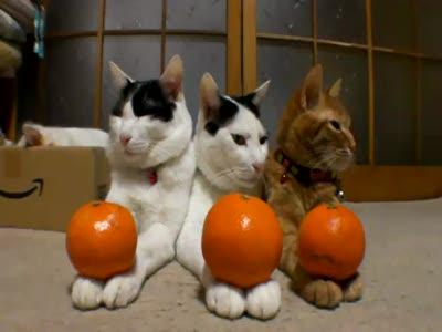 Спокойные коты