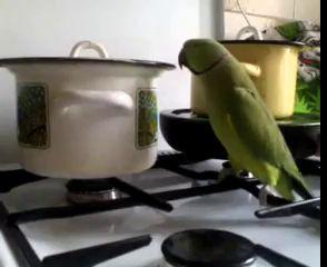 Попугайчик просить кушать