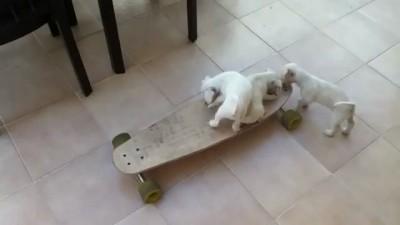 Щенки на скейте