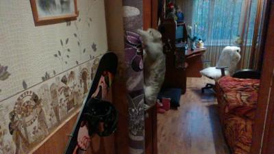кошка на столбе