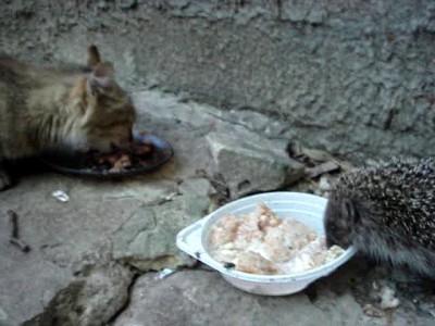 Кошка и ёжик в Киеве