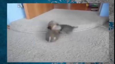 Котенок и щенок. Битва титанов