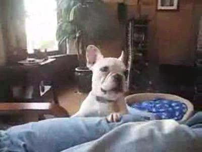 Собачка просит игрушку...