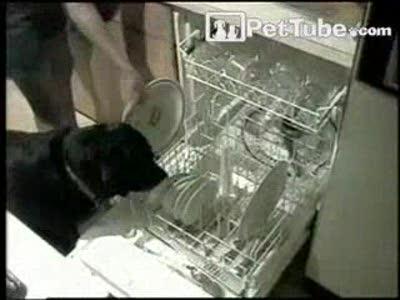 пёс помогает мыть посуду