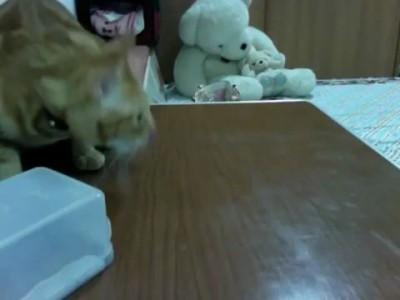Находчивый кот