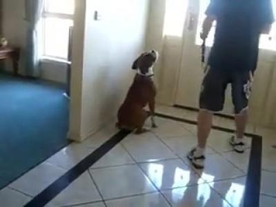 Собакен идет на улицу