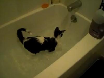 Котт в ванной