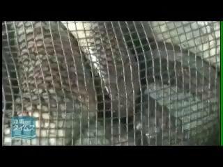 Окинава. Остров Исигаки. Съедобные морские змеи