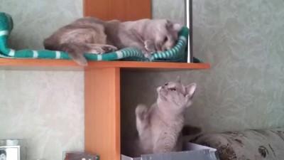 Коты развлекаются