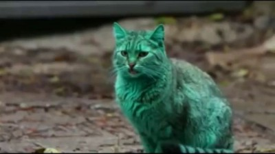 WATCH: Green Cats On Bulgarian Streets | Emerald Green Cat Spotted In Varna, Bulgaria (Video)