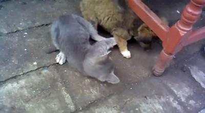 Щенок против котенка