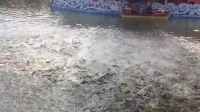 Кормление рыб