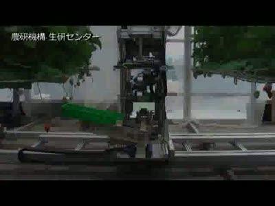 Сбор клубники по-японски