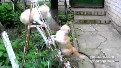 Эпическая Битва за лестницу